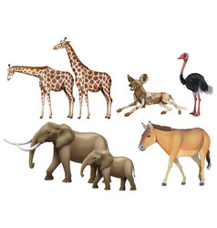 Five types of wild animals vector