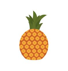 sweet pineapple fruit healthy vector image