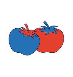 Two ripe tomatoes juicy vegetable fresh vector
