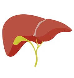 Liver vector