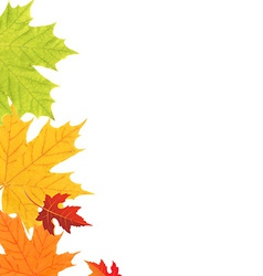 Color leaves border vector