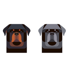 colored and gray rottweiler portrait in geometric vector image