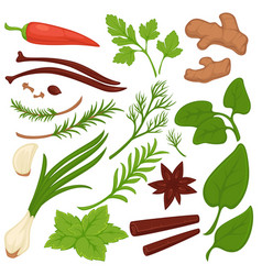 Plants and herbs colorful collection on white vector