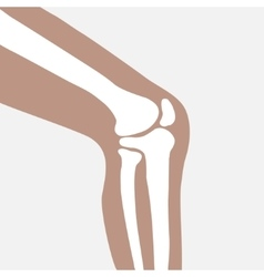 human knee vector image