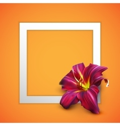 realistic lily flower vector image