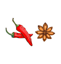 Red chilli pepper with anise star food seasoning vector