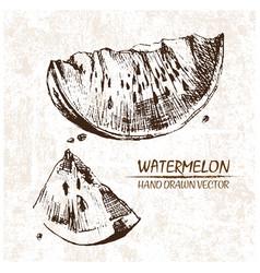 Digital detailed watermelon hand drawn vector