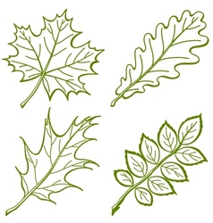 Leaves of plants pictogram set vector