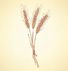 Sketch wheat bran in vintage style vector image