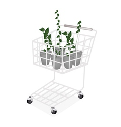A set of creeper plant in a shopping cart vector