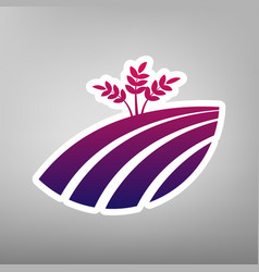 Wheat field sign purple gradient icon on vector