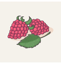 Hand drawn raspberry isolated vector