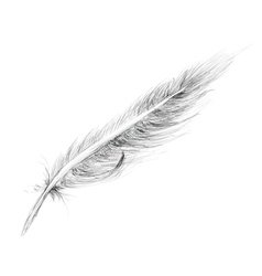Feather hand drawn vector
