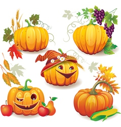 Autumn still life with pumpkins vector image