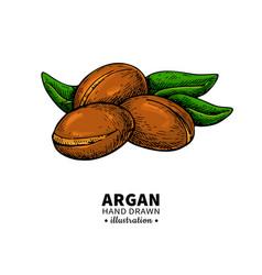 Argan drawing organic essential oil sketc vector