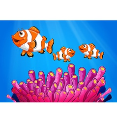 Clownfishes under the sea vector image vector image