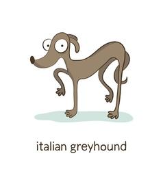 Italian greyhound Dog character isolated on white vector image