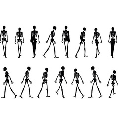 Skeleton silhouette in walk vector