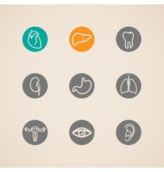 Human organ icons set vector