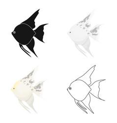 Angelfish common fish icon cartoon singe aquarium vector
