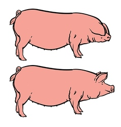 Hand drawn pig isolated pork farm bacon sketch vector