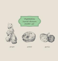 vegetables hand drawn set ginger potato vector image