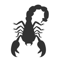 Scorpion animal isolated on white background vector