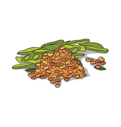Isolated clipart soybean vector