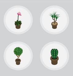 Isometric plant set of grower peyote houseplant vector