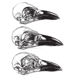 Crow skull vector