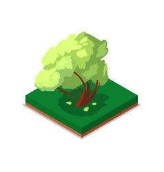 green maple tree isometric 3d icon vector image vector image