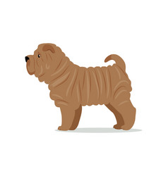 shar pei in stand on white background vector image vector image