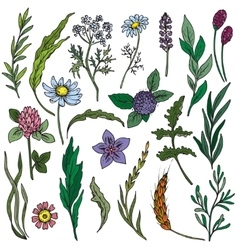 Colorful hand drawn flowers and herbs set vector