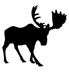 Adult moose vector
