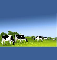 Cows in paddock vector