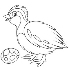 quail vector image vector image