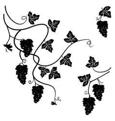 Grapes set of few decorative elements vector