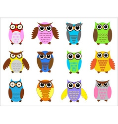 color owls vector image