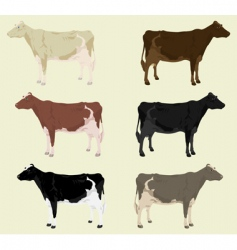 cow3 vector image vector image