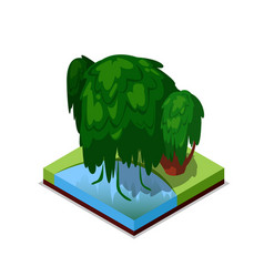 green willow tree isometric 3d icon vector image vector image