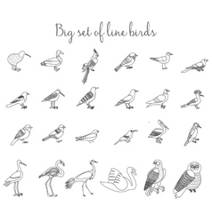 Birds outline thin line icons vector image