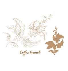 coffee hatching silhouette vector image