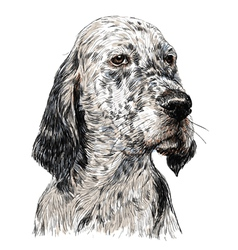 English setter 01 vector image vector image