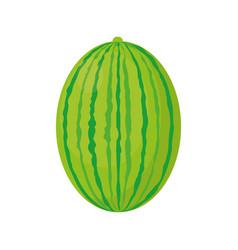 Watermelon juicy fruit healthy vector