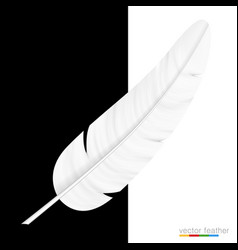white feather on black and white background vector image