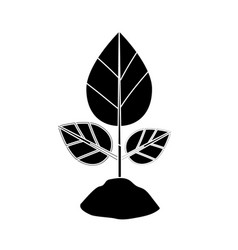 Contour natural plant with leaves and ground to vector