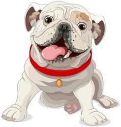 English bulldog vector image