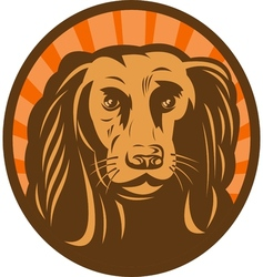 Cocker spaniel head front view with sunburst vector