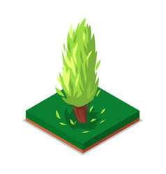 green poplar tree isometric 3d icon vector image vector image