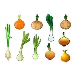 Onion bulbs and leek vegetables vector image vector image